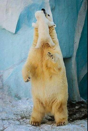 AGAIN I TELL YOU --- LOOK AT THE SHARP CLAWS ON THIS BEAR.........SO DANGEROUS........ccp