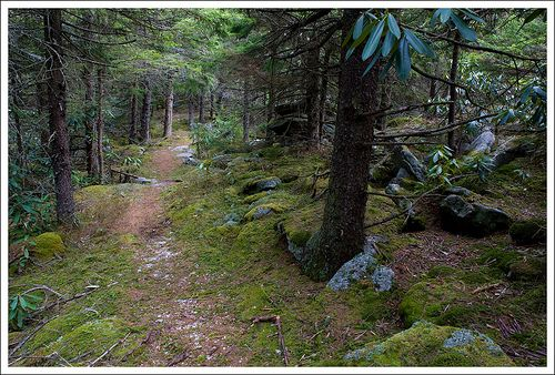 Monongahela National Forest in Elkins, WV https://www.google.com/maps/dir/396+Baird+St,+Morgantown,+WV+26505/Dolly+Sods,+Monongahela+National+Forest,+Dry+Fork,+WV+26260/@39.3525102,-79.8451696,10z/data=!3m1!4b1!4m13!4m12!1m5!1m1!1s0x88357b62d84edb55:0xb55852db4e71e586!2m2!1d-79.9522216!2d39.6299351!1m5!1m1!1s0x89b533047de06a29:0x683b91076b7ab56f!2m2!1d-79.3436563!2d39.0448313?hl=en