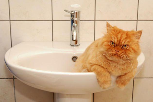 Garfi | Animal fica famoso por ser o gato mais mal humorado da web - Yahoo Notícias