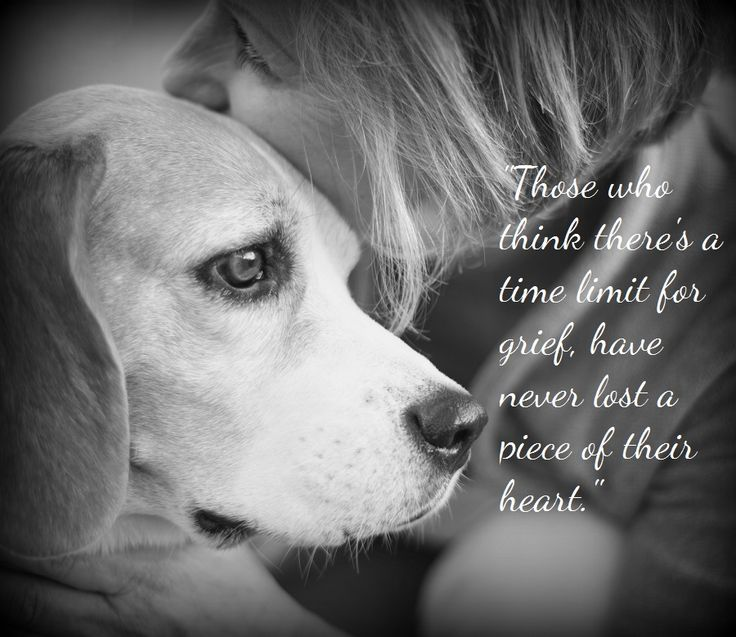 Loss Of Pet Quotes For Dogs: The 25+ Best Pet Loss Quotes Ideas On Pinterest