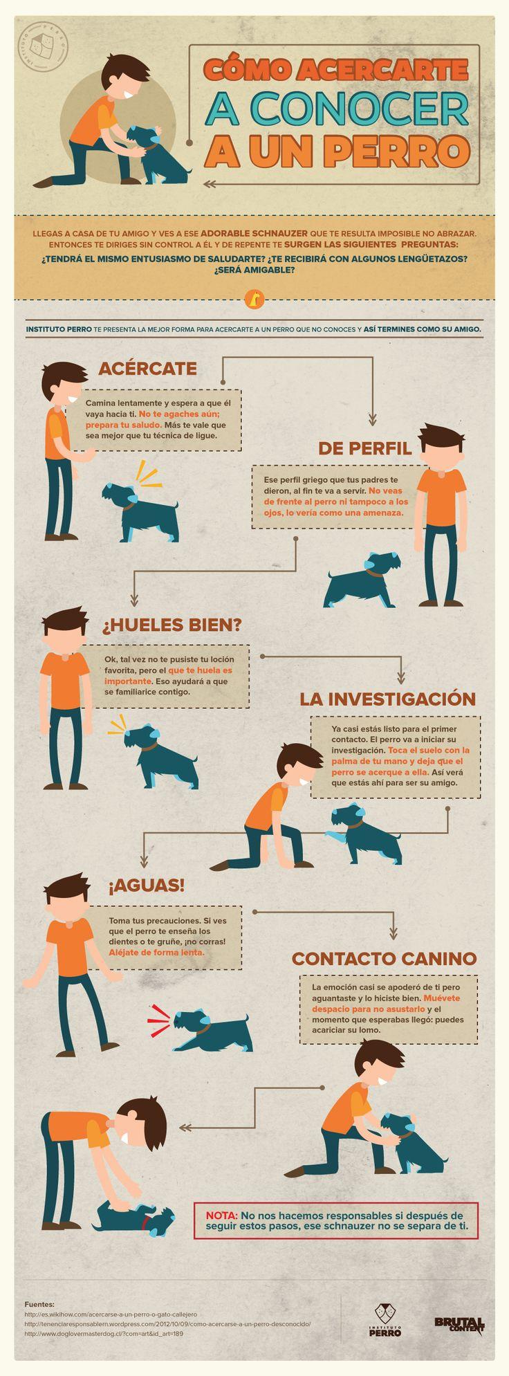 ¿Sabes cómo acercarte a un perro por primera vez?