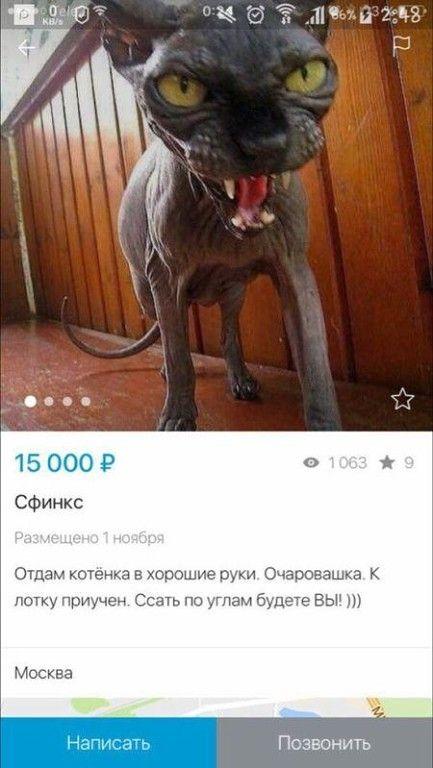 """Фильм """"Чужие"""" отдыхает...   #юмор #животные #кошки"""