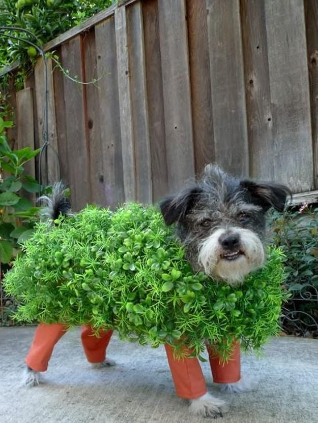 Best 25 diy dog costumes ideas on pinterest dog halloween best 25 diy dog costumes ideas on pinterest dog halloween costumes reddit halloween and dog halloween solutioingenieria Choice Image
