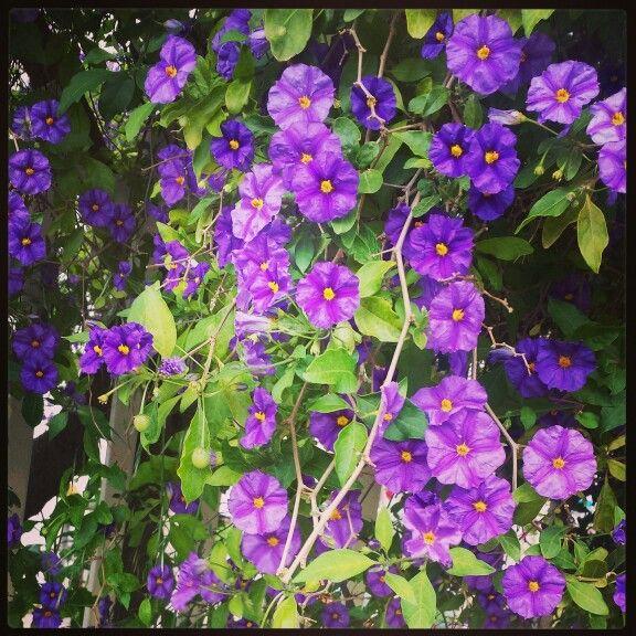 Purple flowers..
