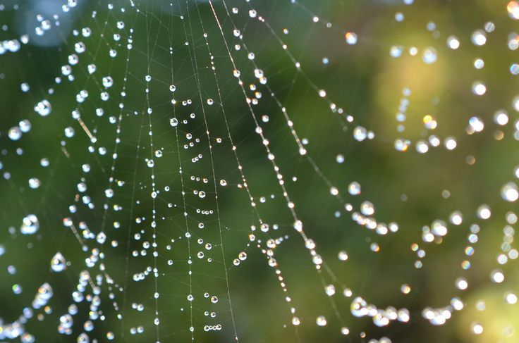 I took this photo one morning, cobwebs and dewdrops, beauty in one of nature's cleverest traps - Captivating