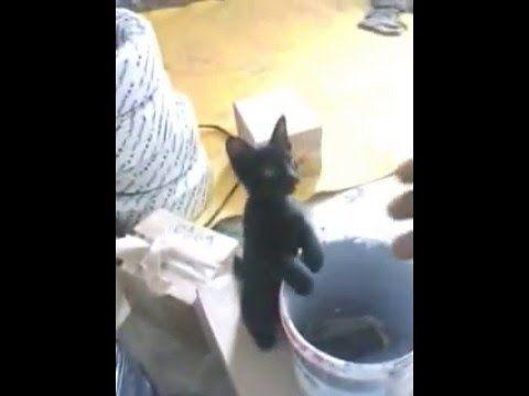 Tingkah Laku Anak Kucing