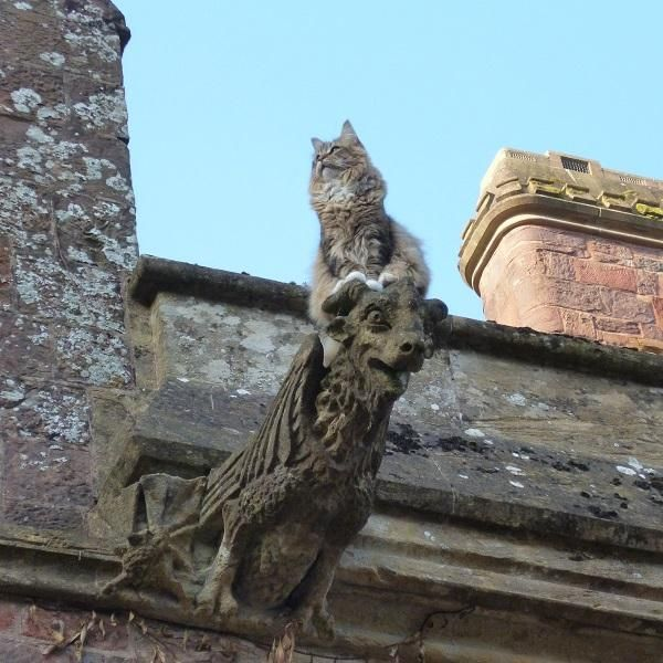 Samson the cat purveying his kingdom at Knightshayes in Devon. Thanks to Louise H and our Knightshayes team for capturing this great pic!