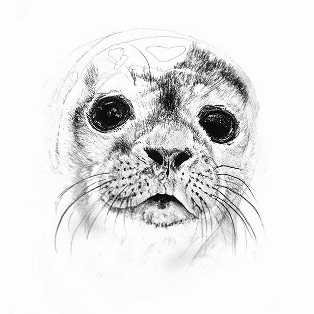 Image result for harbor seal nose tattoo