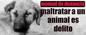 Resultados de la búsqueda de imágenes: CARTELES PARA PROTECCION ANIMAL - Yahoo Search