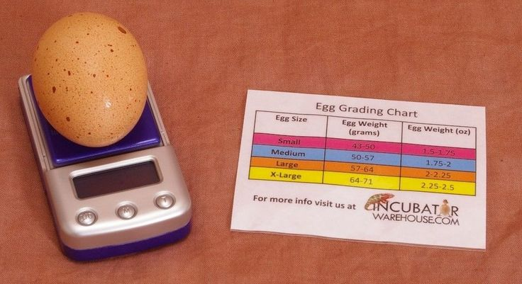 Digital Egg Scale, Incubator Scale, Measure Humidity, Poultry-Chicken-Quail-Duck #Multiple