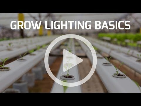 Grow Lighting Basics - All Grow Lighting Compared Education | Best Grow Light Grow Indoor Greenhouse - YouTube