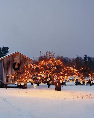 On the grounds of her Bedford, New York home, giant kugel balls hang from the branches of the farm's old apple tree, which is strung with white lights; a mixed-greenery wreath adorns the corn crib.