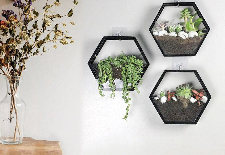 Hexagon Hydroponic Vase Wall Hanging Planter Indoor Hanging Etsy