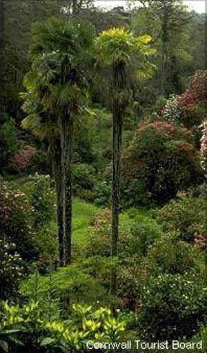 Trebah gardens, falmouth