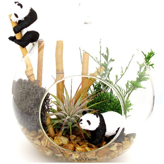Panda Habitat Animal Terrarium Air Plant by AGiftofNature on Etsy