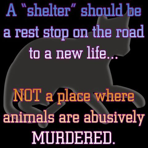 """""""Shelter killing is the leading cause of death for healthy dogs and cats in the United States. Today, an animal entering a shelter has only one chance in two of making it out alive, and in some places it is as low as one in ten, with shelters blaming a lack of available homes as the cause of death. And yet, statistics reveal that there are over seven times as many people looking to bring an animal into their home every year as there are animals being killed in shelters because they lack one…"""