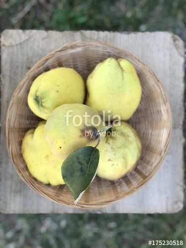 "Download the royalty-free photo ""Quincies in a basket"" created by yournameonstones at the lowest price on Fotolia.com. Browse our cheap image bank online to find the perfect stock photo for your marketing projects!"