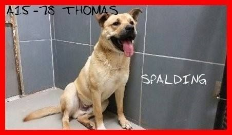 Spalding Co., Griffin GA * Spalding County Animal Shelter
