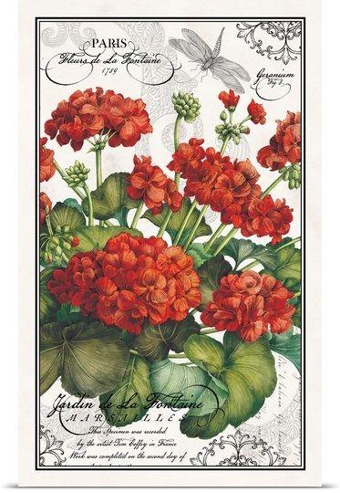 Botanical Geraniums Photo Canvas Print   Great Big Canvas