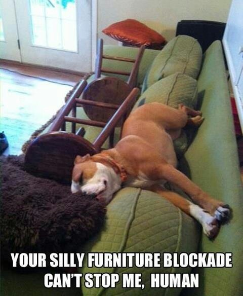 Thats so my dog, lol! Dixie finds her way around anything.