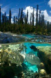 Piscine naturelle, île des Pins #1