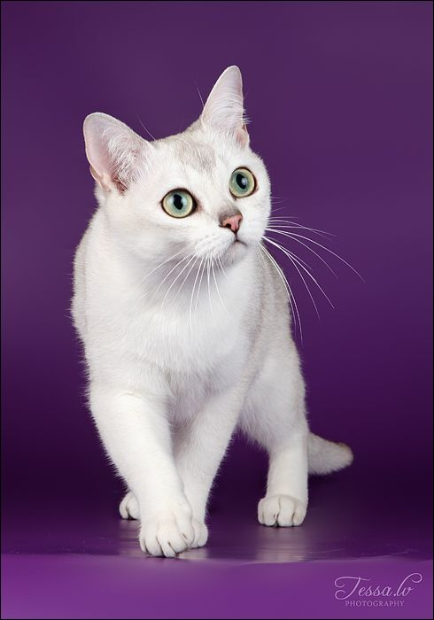"""""""There is something so peculiar about a  cat's mysterious ways."""" Eliot Walker"""