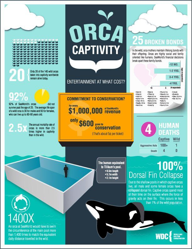 Infographic comparing the life of an orca in the wild v. in captivity. Highlights why these magnificent creatures should be left in the wild.