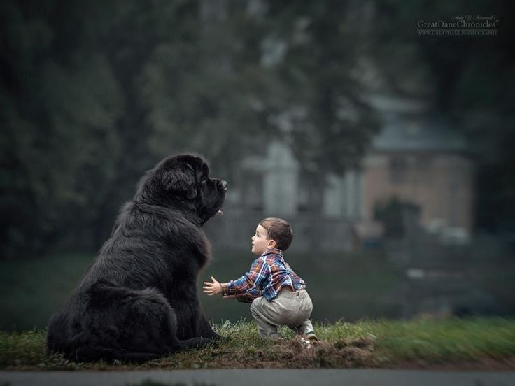 Best Andy Seliverstoff Images On Pinterest Friendship Cats - Tiny children and their huge dogs photographed in adorable portraits by andy seliverstoff