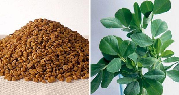 Le fenugrec est l'un des produits naturels les plus utilisés en médecine traditionnelle. Découvrez les meilleurs bienfaits santé du fenugrec !