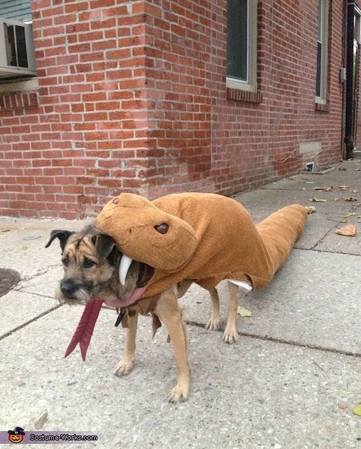 295 best costume ideas for pets images on pinterest costume ideas rattlesnake dog diy costume solutioingenieria Image collections