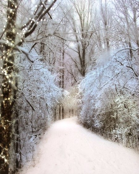 Winter path.  Snow like light.  Warm lights, chill-coated trees.