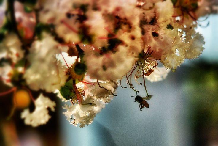 Bee approaching by hendra.poerwita