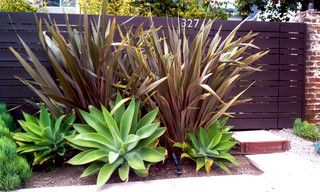 Gate Entry - contemporary - landscape - los angeles - by CARL BALTON & ASSOCIATES agave yucca