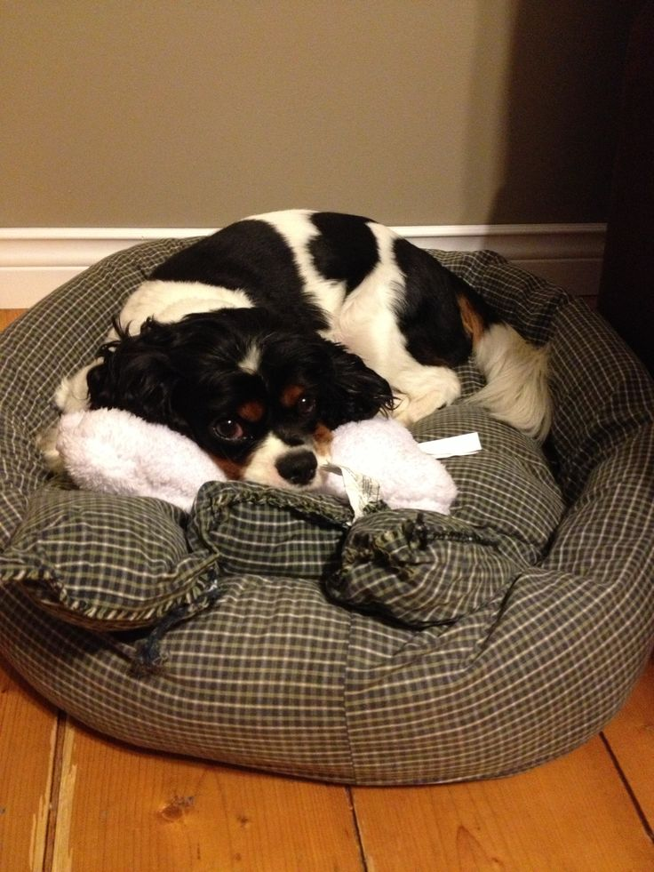 Tut lying in his basket with his toy