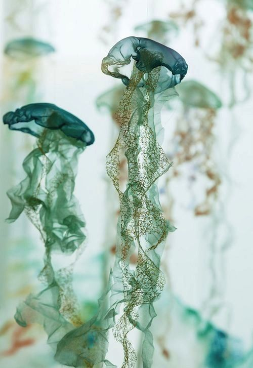 Gorgeous Jellies