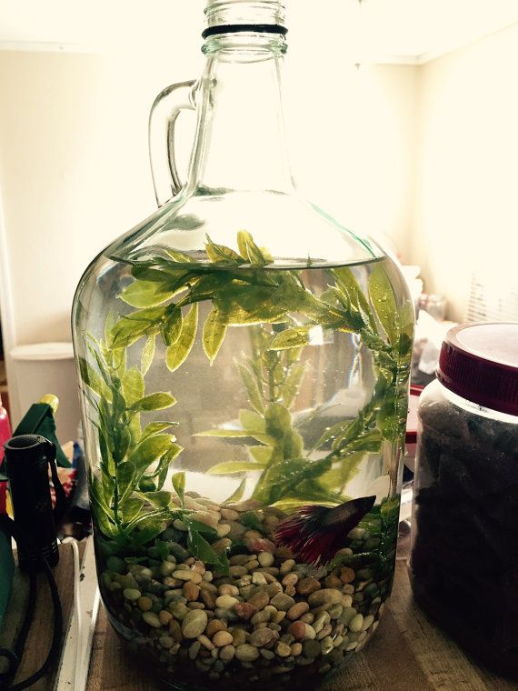 Upcycled Jug Beta Fish Centerpiece by RuralKountry on Etsy