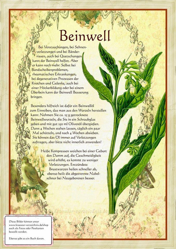 Beinwell http://www.kraeuter-verzeichnis.de/