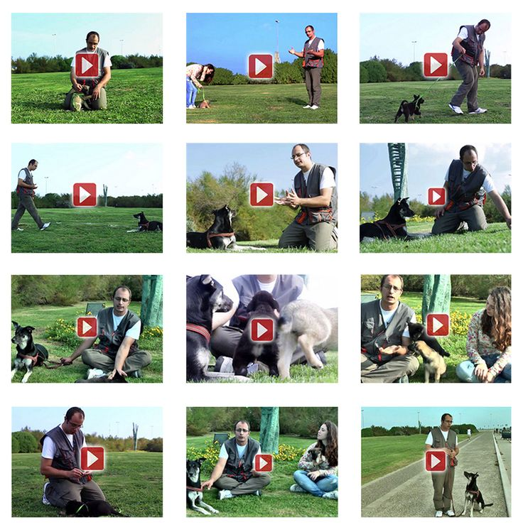 Video Corso Addestramento Cani - Addestramentocaniblog.it