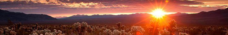 Sunrise at the Cholla Cactus Garden, Joshua Tree