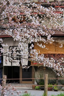 ZENBU HARU. Kyoto Spring Tour. April 14-27 2014 See my blog for details.  Numbers are limited.
