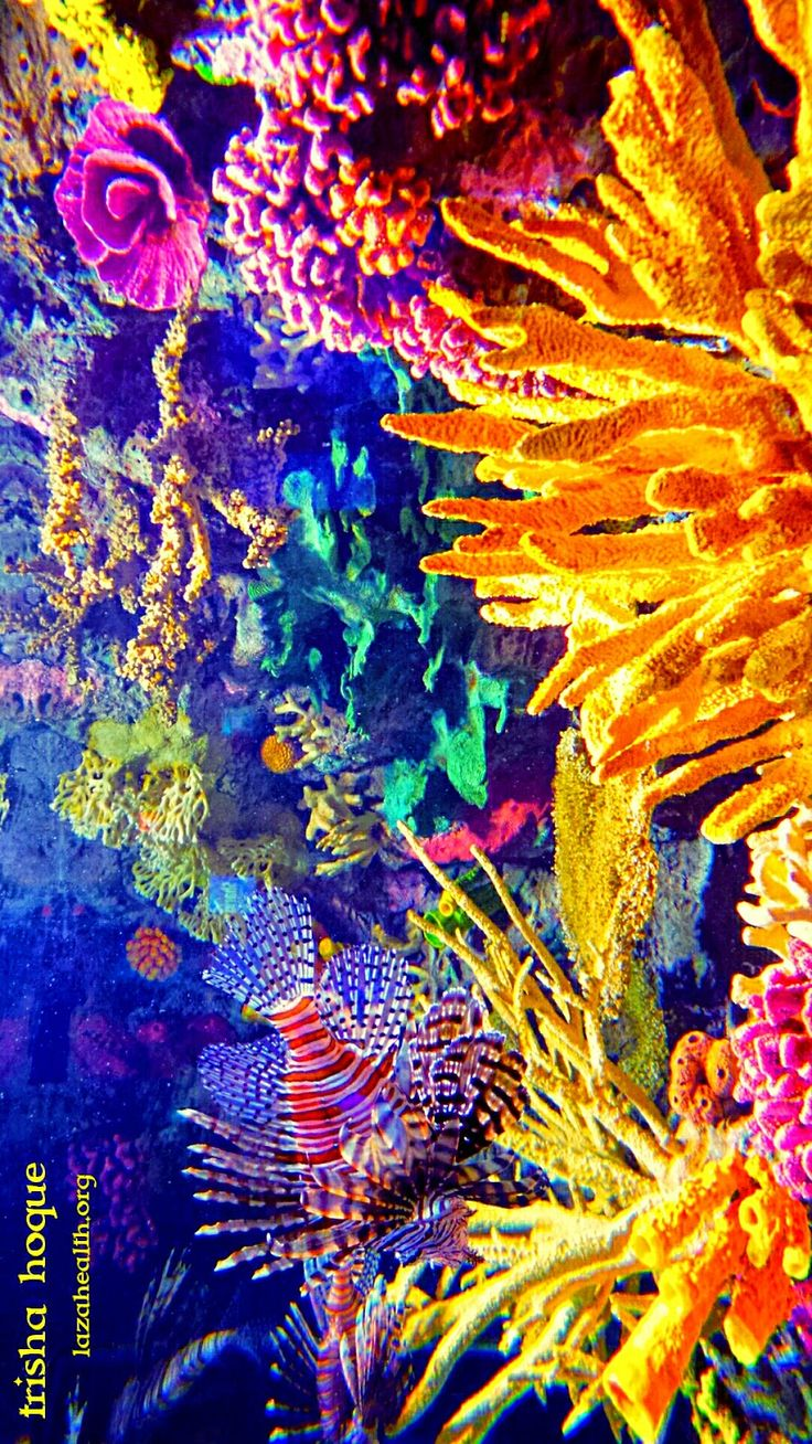 Nature paints the most beautiful masterpieces: vibrantly colorful underwater  Coral reefs with its assortment of fishes