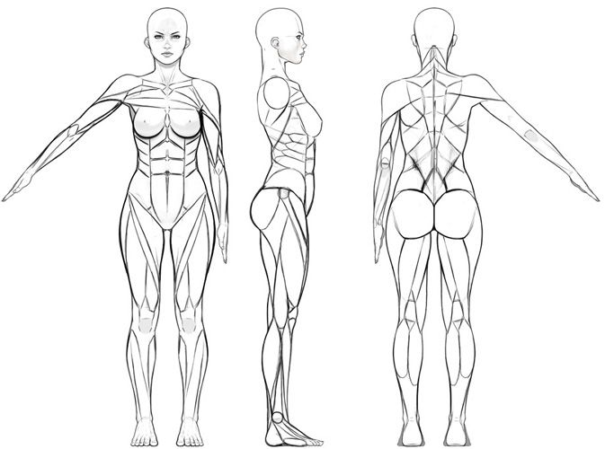 body model sheet - Cerca con Google