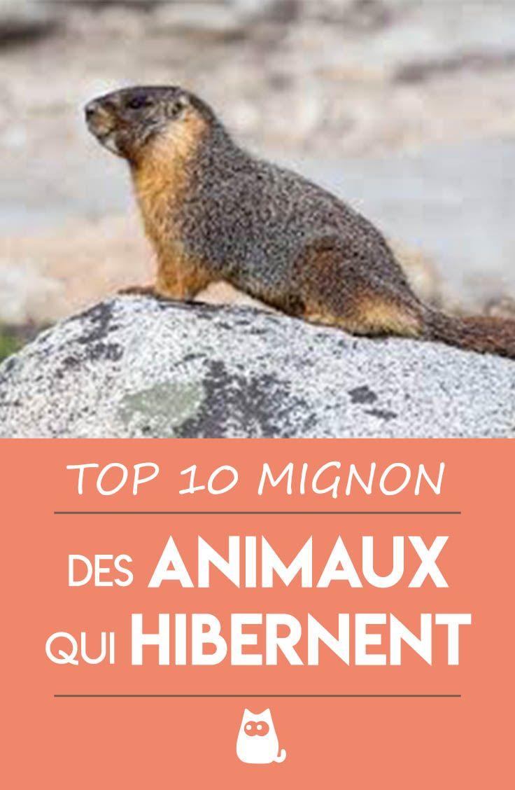 Les Animaux Qui Hibernent : animaux, hibernent, Quels, Animaux, Hibernent, Hibernation,, Acting,, Scout