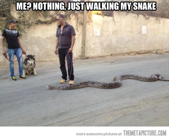 What's more intimidating? A watch dog or a watch snake? Exactly.