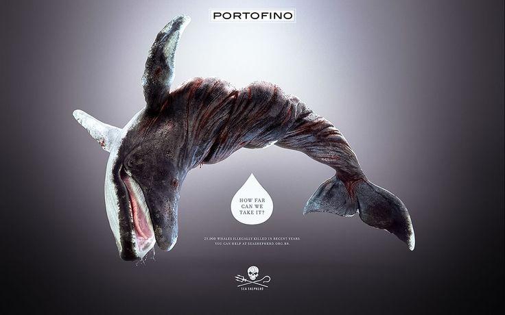 portofino-sea-shepherd-7