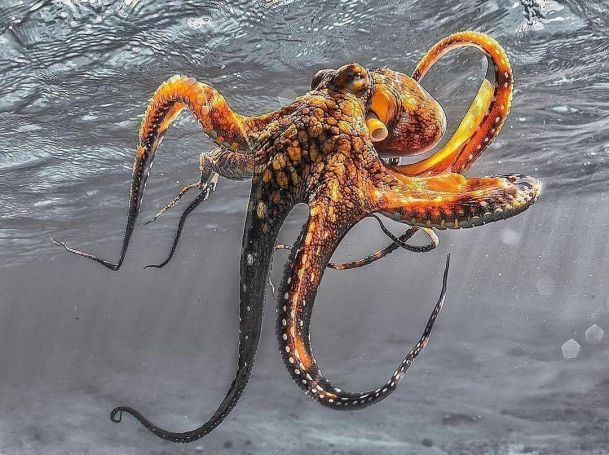 41Octopus Photography
