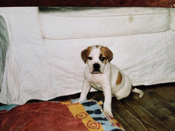 Bami als pup