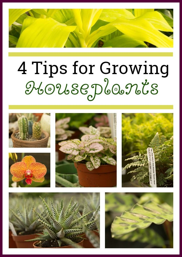 4 Tips for Growing Houseplants (Even if you don't have a green thumb!)