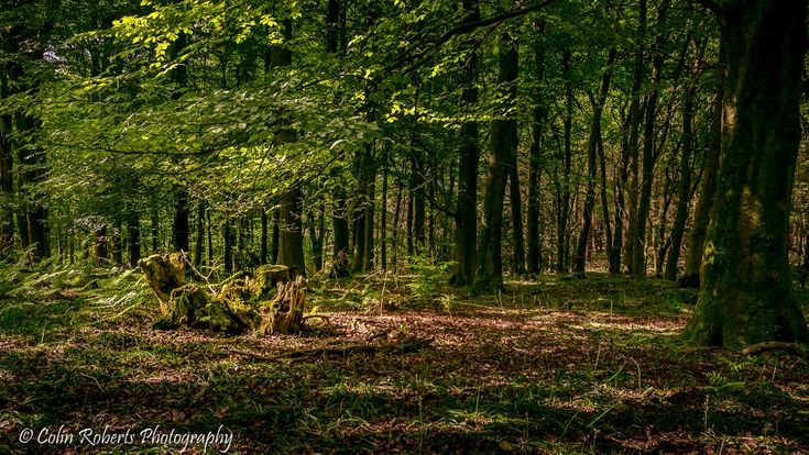 Forest Morning Light by colin.roberts484