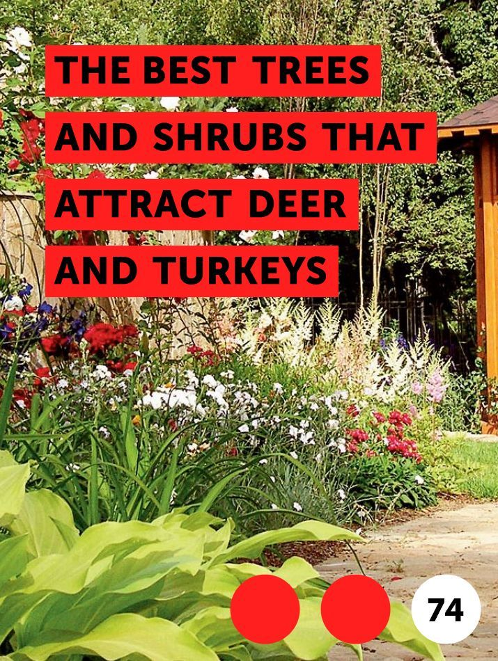 the best trees and shrubs that attract deer and turkeys trees rh pinterest com
